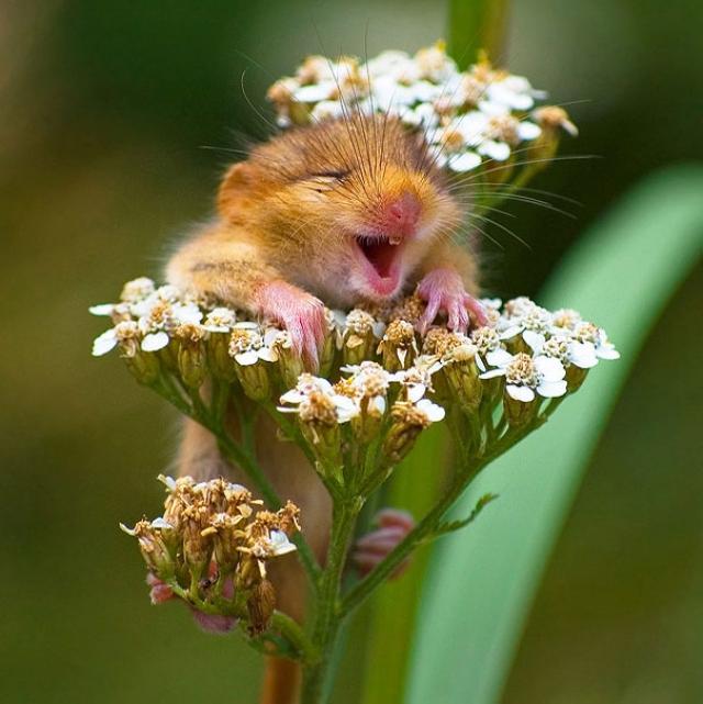 Фотографии улыбающихся животных /3667889_1395778123_4347e310402ba43582a0bf8cb21e0c5b_l_1 (640x641, 249Kb)