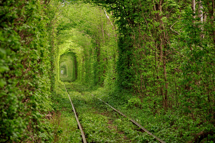 7. Украина,  Ровенская область, Тоннель любви (700x464, 609Kb)