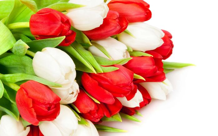тюльпан 18 (700x437, 292Kb)