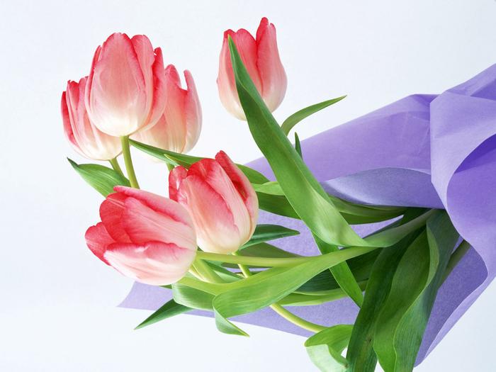 тюльпан 22 (700x525, 319Kb)