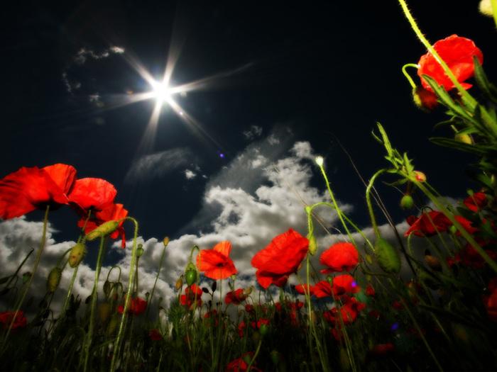 Flowers_of_Lesbury-1024-768 (700x525, 123Kb)