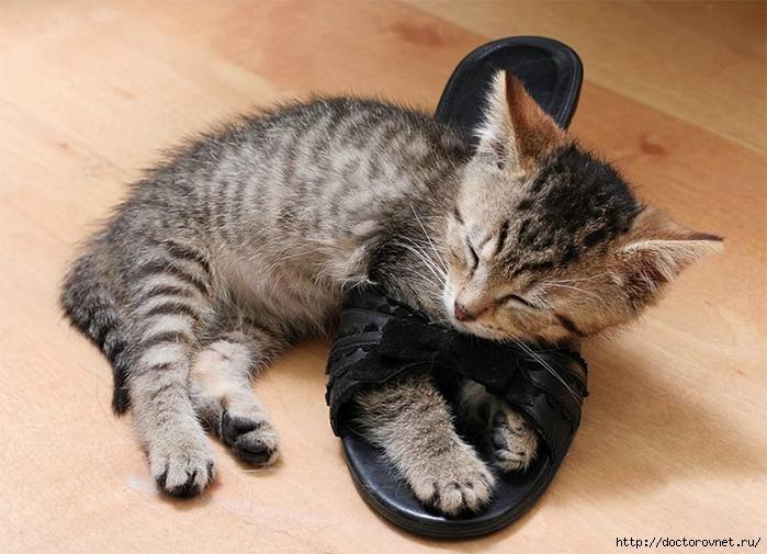 спящие коты2 (700x505, 261Kb)