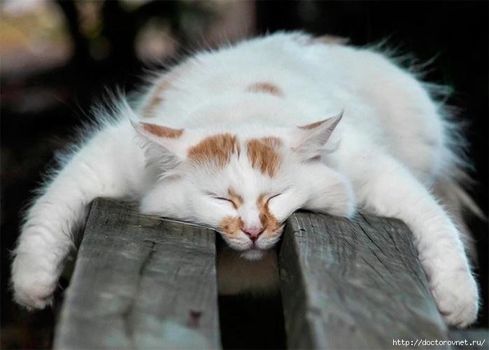 спящие коты (700x500, 188Kb)