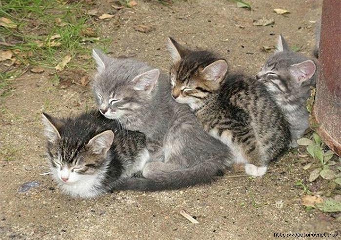 спящие коты19 (700x492, 326Kb)