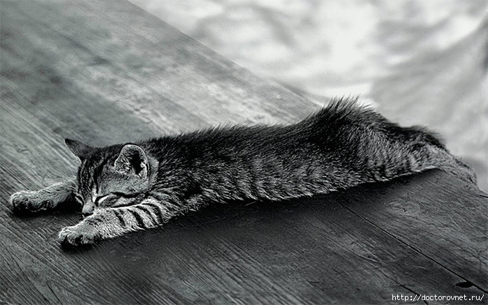 спящие коты13 (700x437, 240Kb)