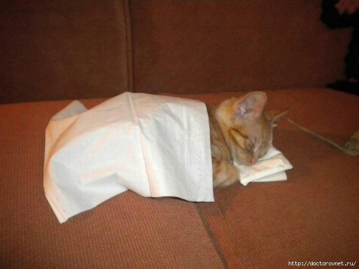 спящие коты11 (700x525, 140Kb)