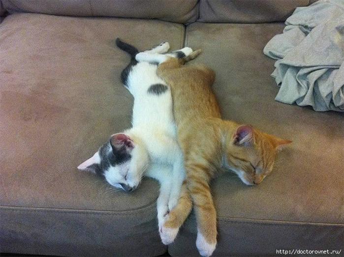 спящие коты7 (700x521, 288Kb)