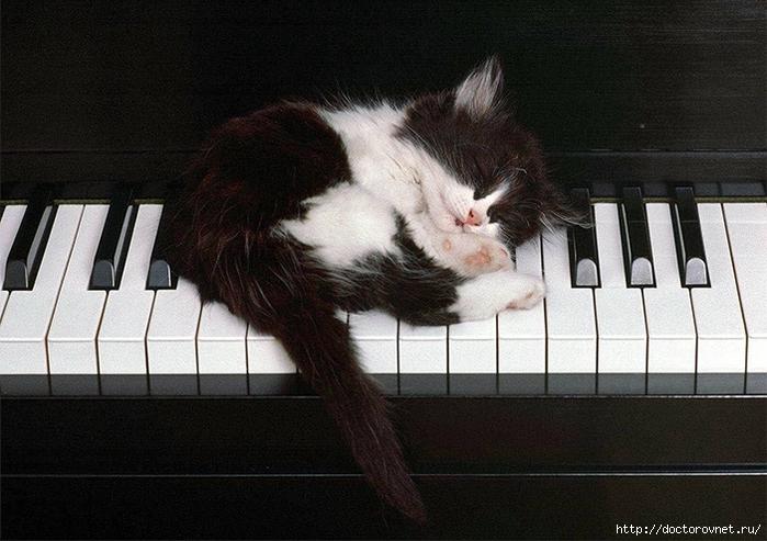 спящие коты4 (700x493, 266Kb)