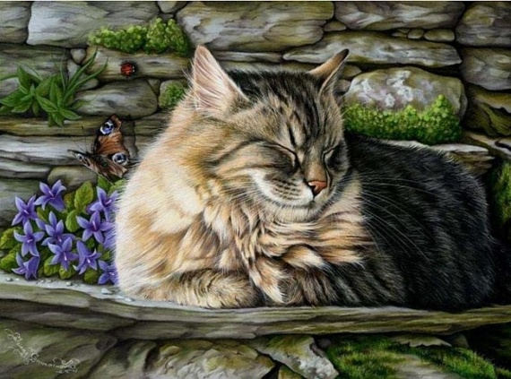 кошка43 (570x423, 120Kb)