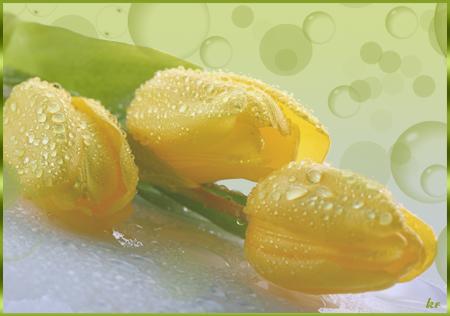 Желтые-тюльпаны (450x316, 209Kb)
