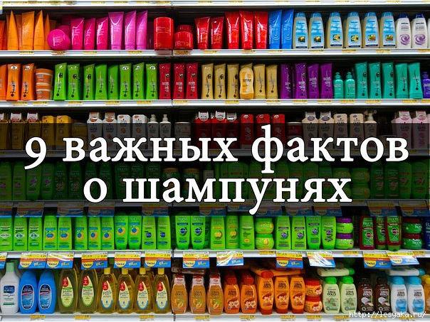 3925073_tismtmi (604x453, 276Kb)