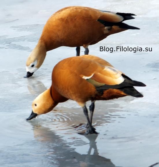 3241858_bird24 (550x577, 119Kb)
