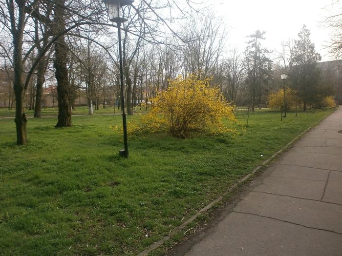 весна (700x525, 328Kb)