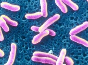 Дифтерия - бактериальная инфекция