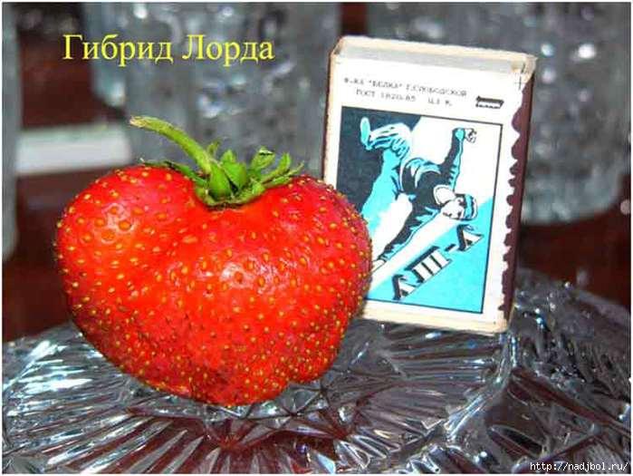 nadjibok58/5186405_image_87_1 (700x525, 185Kb)