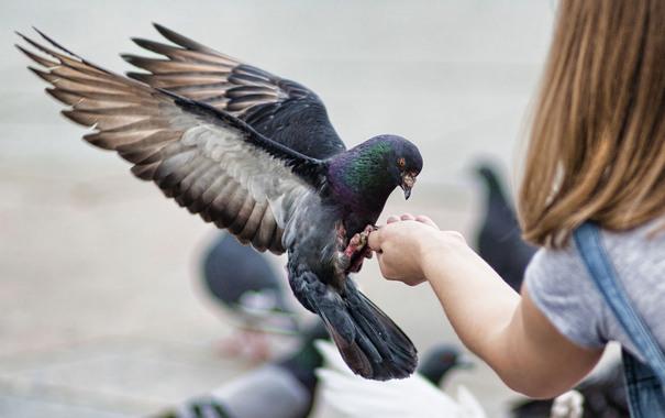 кормить птиц/4348076_4545w (605x380, 61Kb)