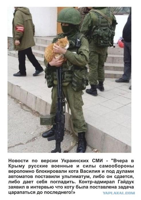 вежливые люди с котом