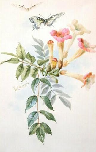 Бабочки и другие насекомые. Картинки для декупажа (4) (323x512, 100Kb)