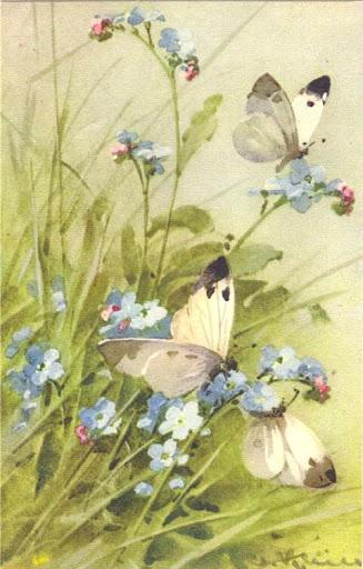 Бабочки и другие насекомые. Картинки для декупажа (6) (327x512, 163Kb)
