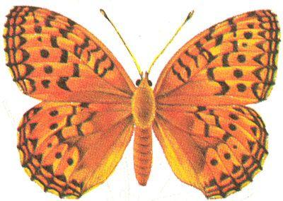 Бабочки и другие насекомые. Картинки для декупажа (12) (400x284, 154Kb)