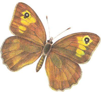 Бабочки и другие насекомые. Картинки для декупажа (14) (400x363, 111Kb)