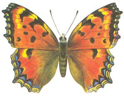 Бабочки и другие насекомые. Картинки для декупажа (16) (400x309, 129Kb)