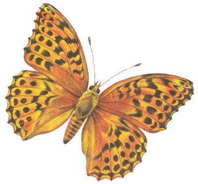 Бабочки и другие насекомые. Картинки для декупажа (18) (400x371, 118Kb)