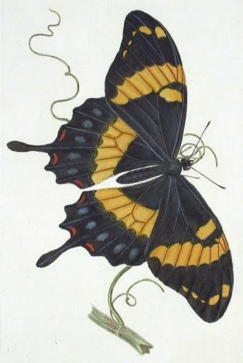 Бабочки и другие насекомые. Картинки для декупажа (20) (344x512, 121Kb)