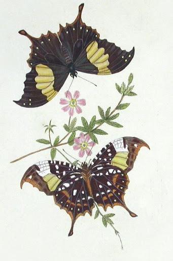 Бабочки и другие насекомые. Картинки для декупажа (21) (341x512, 127Kb)