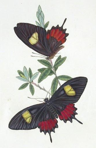 Бабочки и другие насекомые. Картинки для декупажа (23) (332x512, 112Kb)