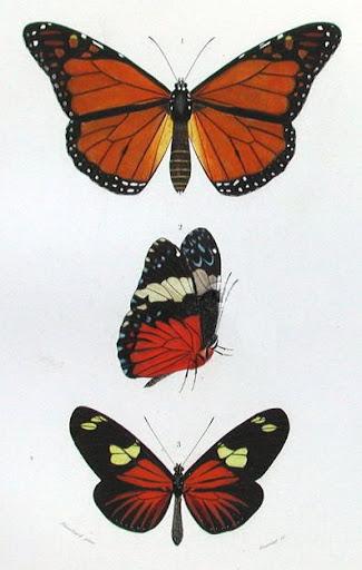 Бабочки и другие насекомые. Картинки для декупажа (24) (325x512, 115Kb)