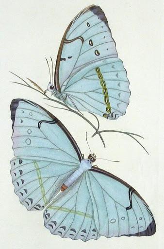 Бабочки и другие насекомые. Картинки для декупажа (26) (338x512, 134Kb)