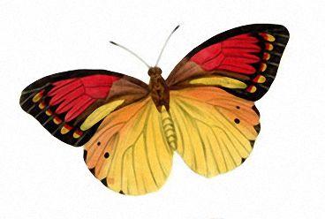 Бабочки и другие насекомые. Картинки для декупажа (29) (368x248, 65Kb)