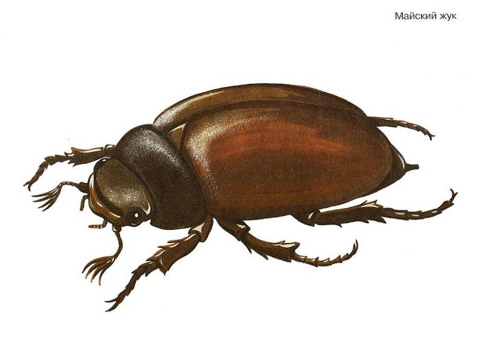 Бабочки и другие насекомые. Картинки для декупажа (33) (700x500, 165Kb)