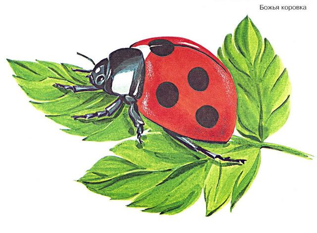 Бабочки и другие насекомые. Картинки для декупажа (35) (640x471, 257Kb)