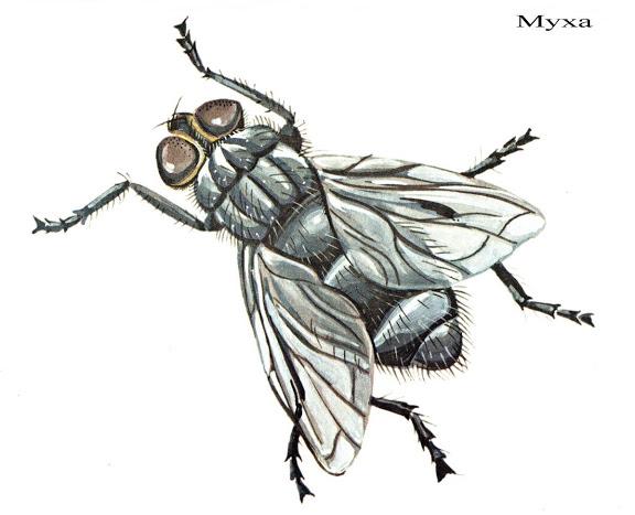 Бабочки и другие насекомые. Картинки для декупажа (37) (576x467, 133Kb)