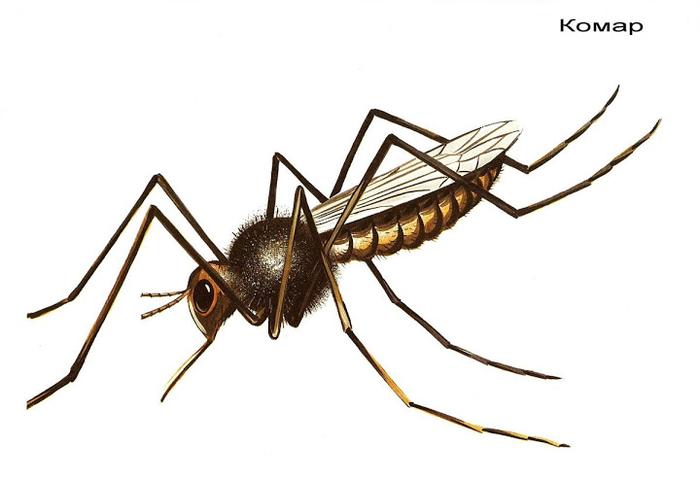 Бабочки и другие насекомые. Картинки для декупажа (41) (700x480, 142Kb)