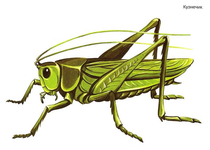Бабочки и другие насекомые. Картинки для декупажа (44) (700x499, 216Kb)