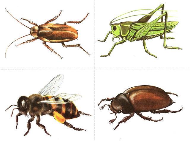 Бабочки и другие насекомые. Картинки для декупажа (45) (640x473, 187Kb)