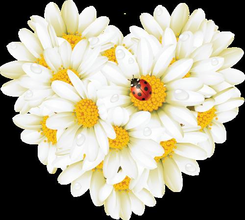 Картинки цветы ромашки нарисованные 8