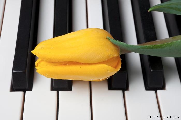 Цветы на клавишах рояля… в глазах две капельки росы…