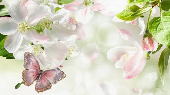 Обои на рабочий стол 1920х1080 цветы