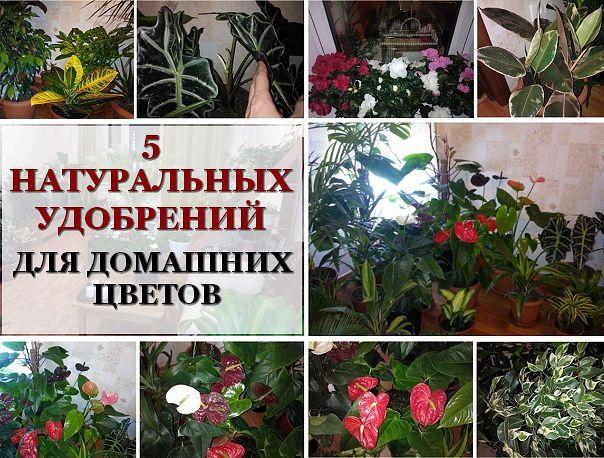 4121583_psoor (604x458, 91Kb)
