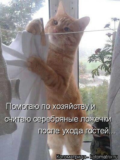 kotomatritsa_7w (398x530, 98Kb)