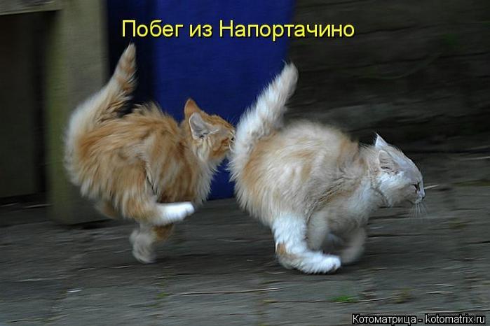 kotomatritsa_Cz (700x466, 184Kb)