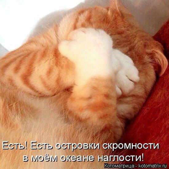 kotomatritsa_nU (550x550, 146Kb)