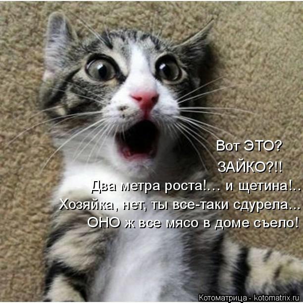 kotomatritsa_V (612x612, 160Kb)