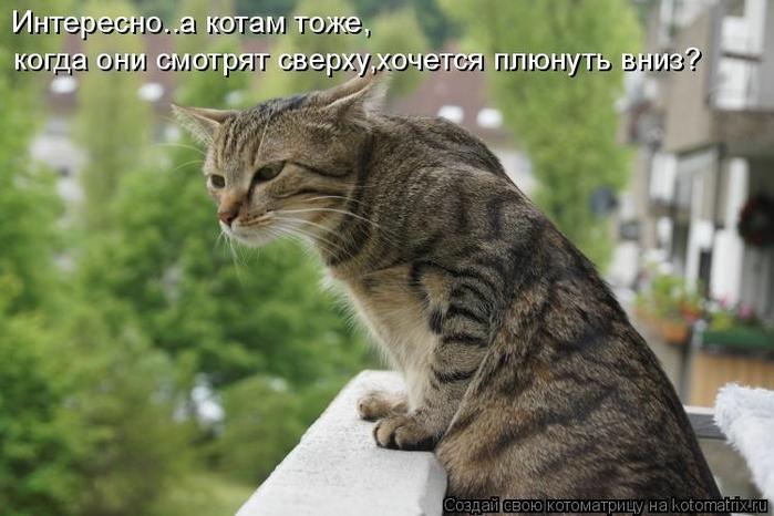 kotomatritsa_Yj (700x466, 215Kb)