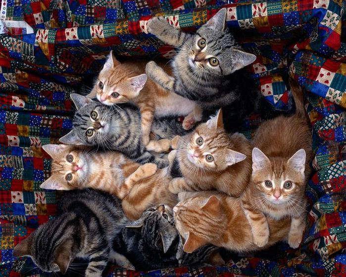 3578968_kitten33 (700x559, 95Kb)
