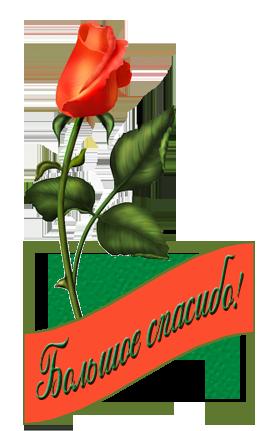 большое спасибо роза (264x431, 96Kb)